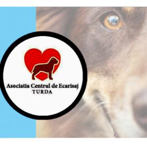 Tierheim Turda